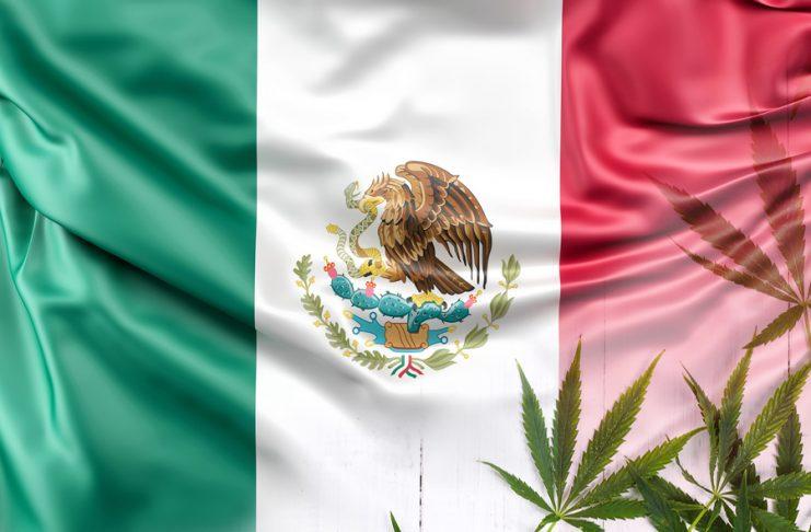 legalización del cannabis en México