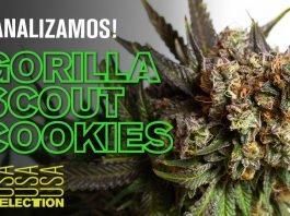 Características Gorilla Scout Cookies