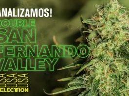 planta marihuana double san fernando valley