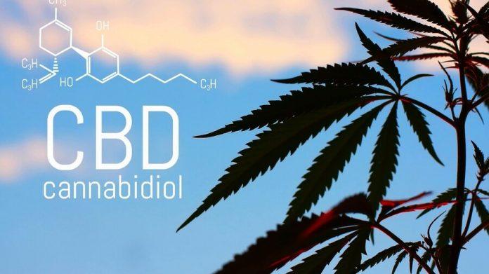 planta marihuana medicinal cbd