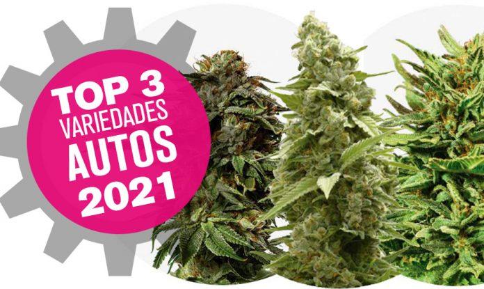 TOp 3 variedades de marihuna autoflorecientes 2021