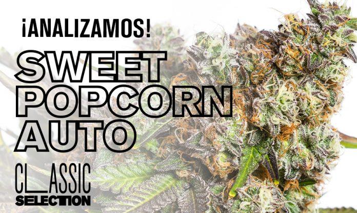 semilla marihuana sweet popcorn autp