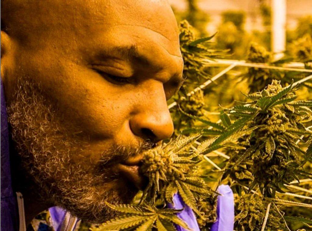 Tyson cannabis industry