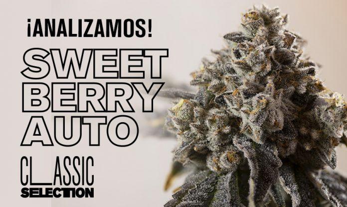 cogollo de sweet berry auto